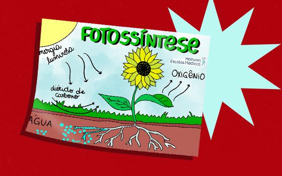 Resumo 2 (fotossíntese)