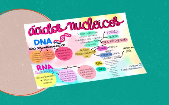 Mapa Mental 4 (ácidos nucleicos)
