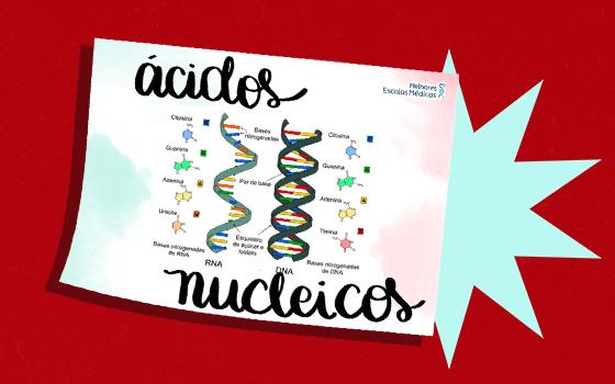 Resumo 5 (Ácidos Nucleicos)